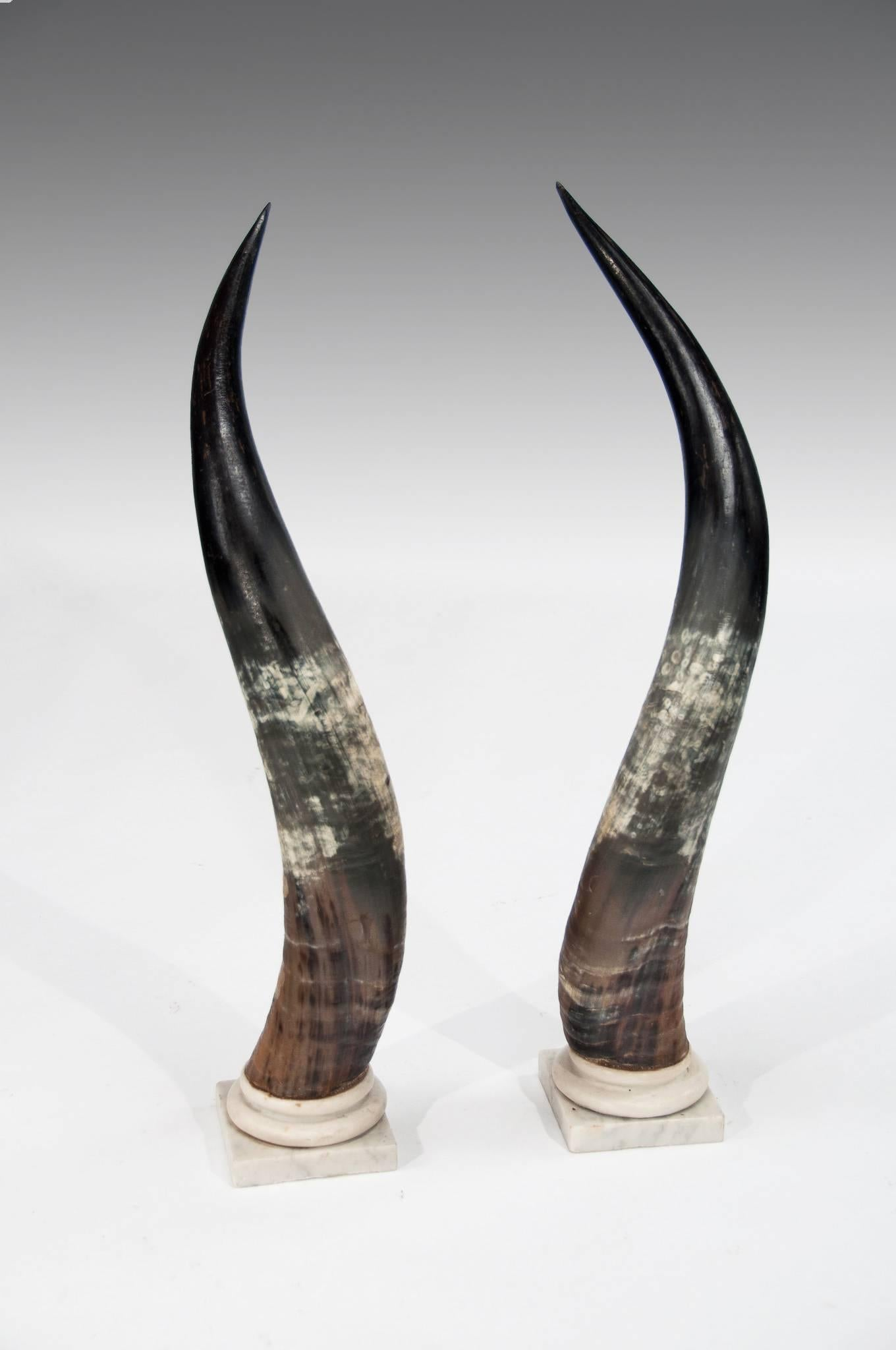 Antique Design for Artistic Interior US Exporter Bull Horn for Home Decor