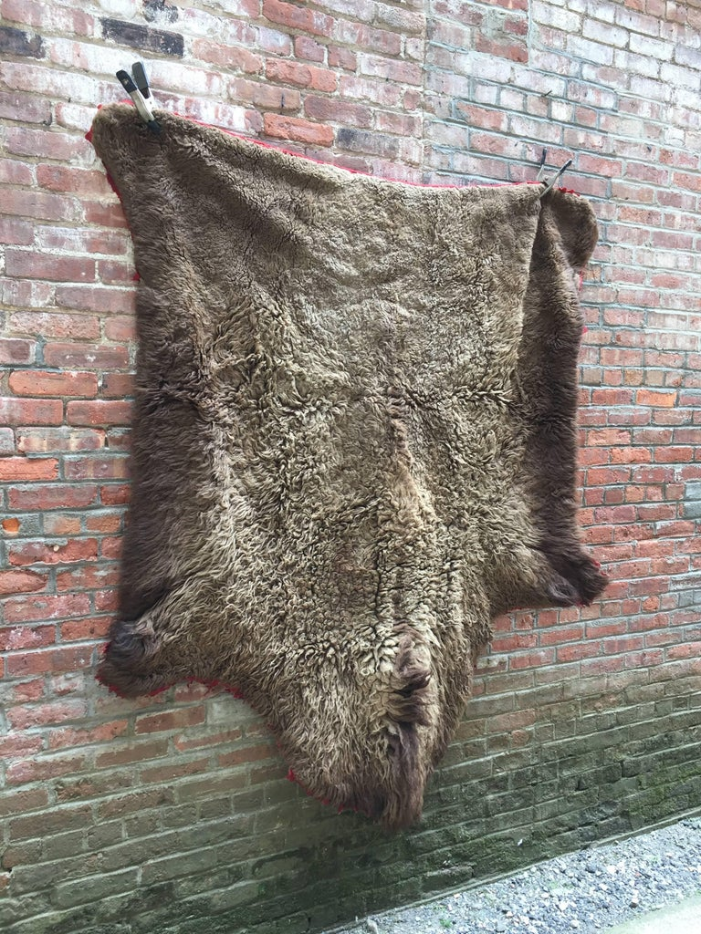 Early 1910s Buffalo Hide Rug 2