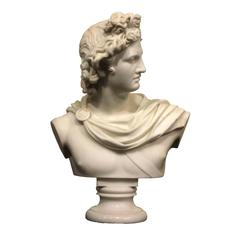 Marble Bust of the Apollo Belvedere