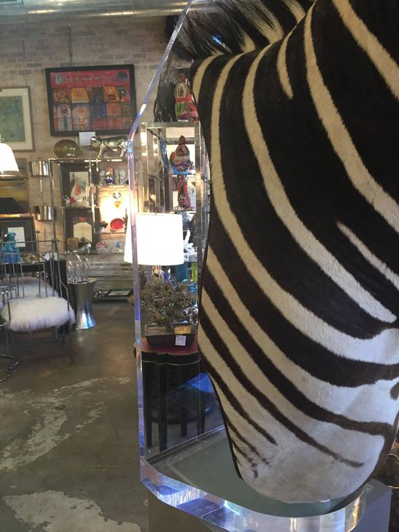 Lucite Zebra Mount Taxidermy For Sale