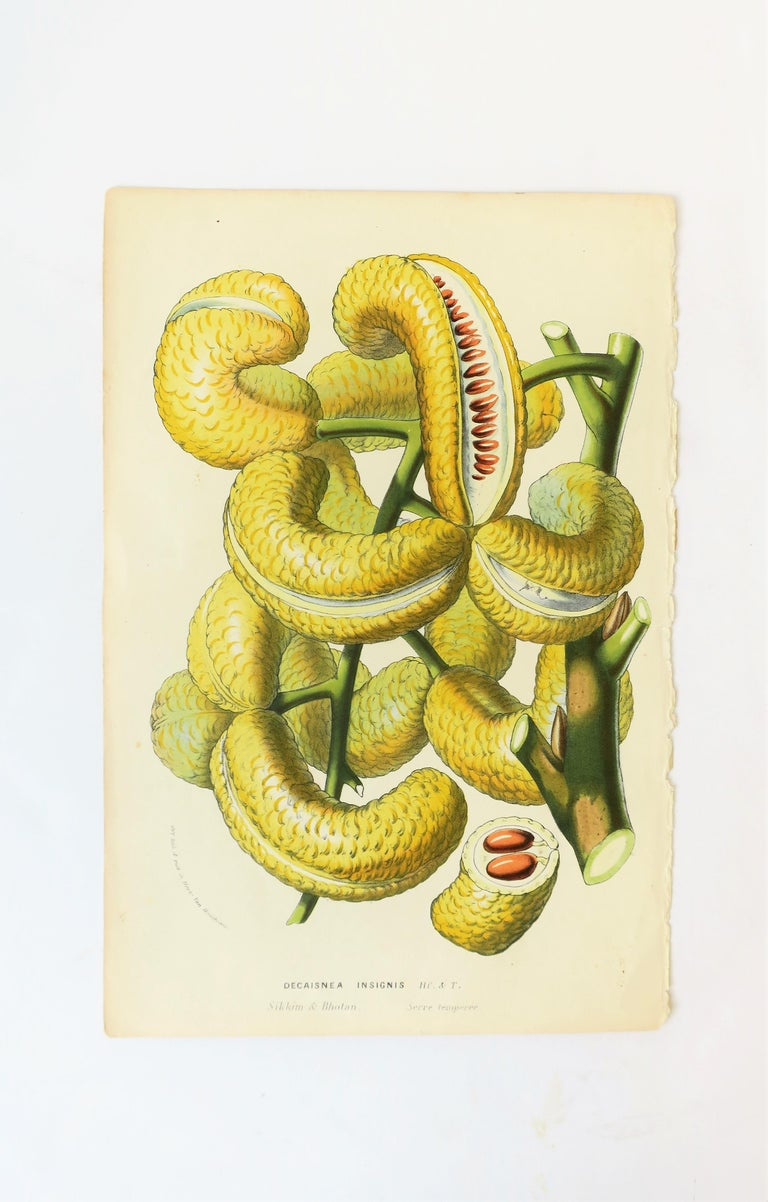 European Botanical Wall Art Prints, Late 19th Century For Sale at ...