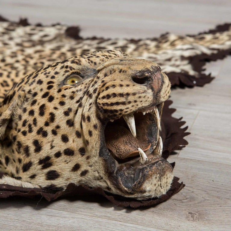 Description A Leopard Skin Rug By The World Famous Taxidermist Rowland Ward Known For