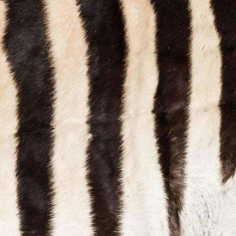 Genuine Large African Burchell Zebra Skin In Good Condition For Sale In London, GB
