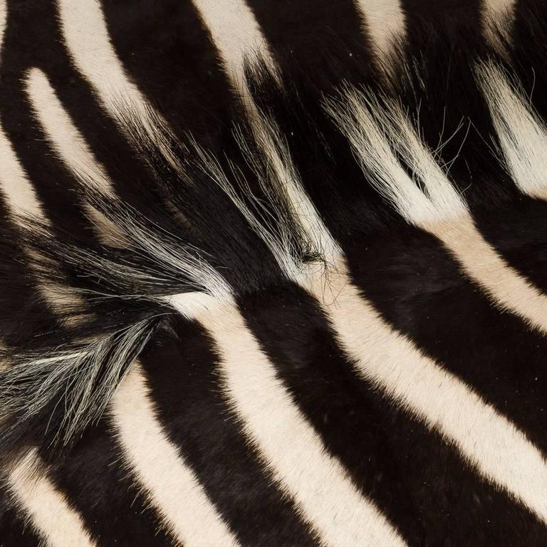 Contemporary Genuine Large African Burchell Zebra Skin For Sale