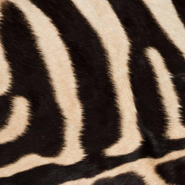 Genuine Large African Burchell Zebra Skin For Sale 1