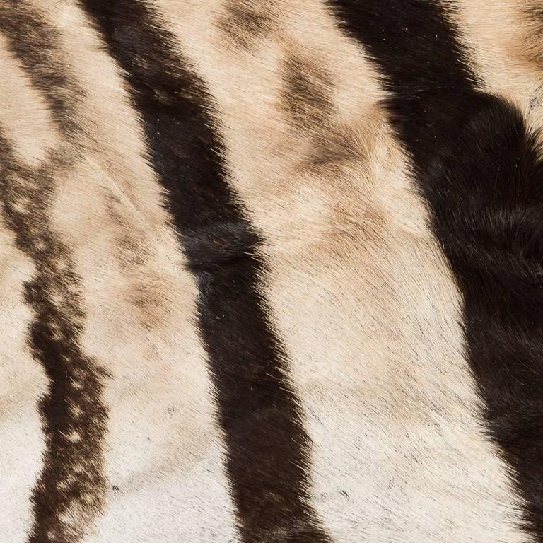 Animal Skin Genuine Large African Burchell Zebra Skin For Sale