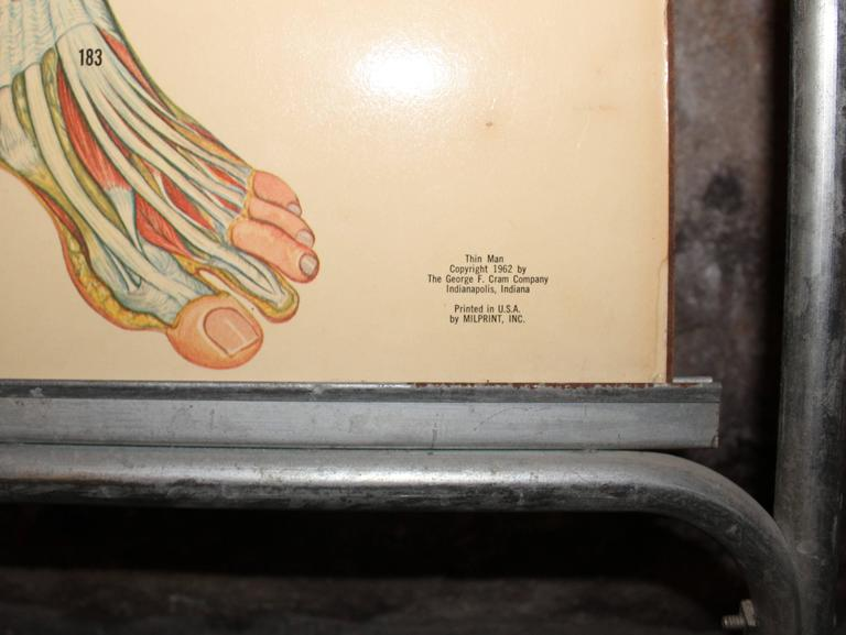 Medical Anatomy Chart Titled 'Thin Man' For Sale 3
