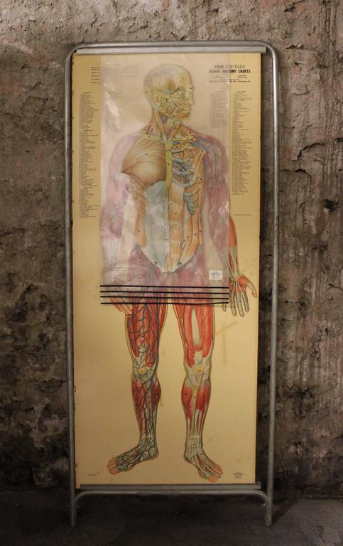 This is a fantastic double-sided anatomy chart with four separate overlays showing the human body in various layers. Titled the Thin Man this piece was produced by the George F. Cram Company of Indianapolis, Indiana and the artwork was done by