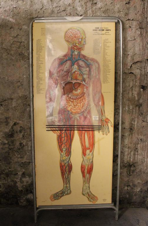 American Medical Anatomy Chart Titled 'Thin Man' For Sale