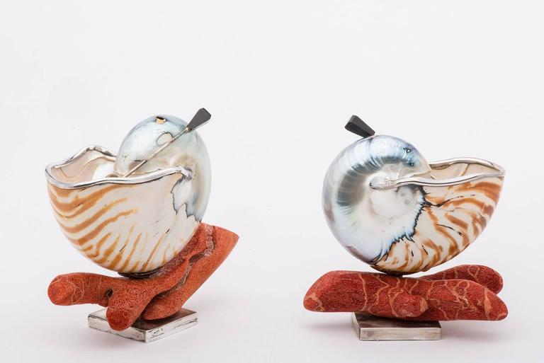 Elegant and Nice Nautilus Shells for Salt 9