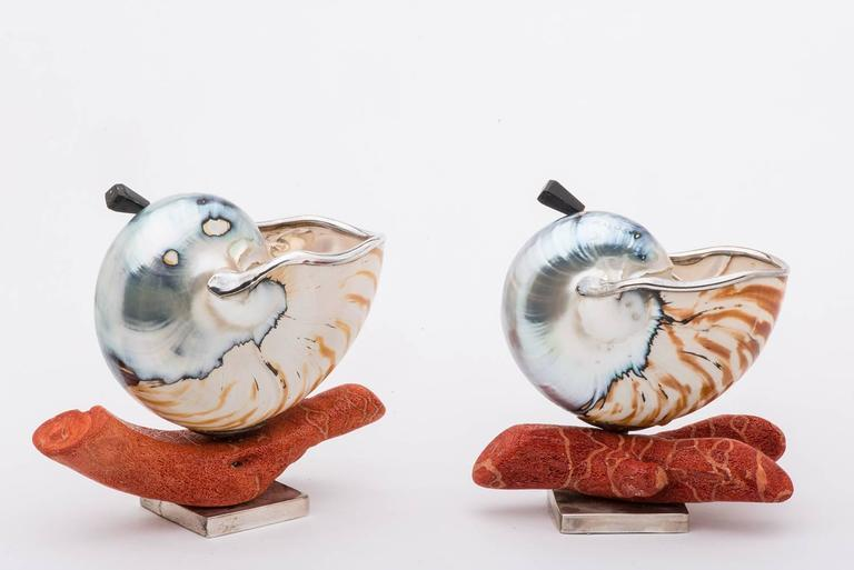 Elegant and Nice Nautilus Shells for Salt 5