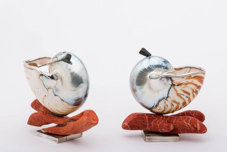 Elegant and Nice Nautilus Shells for Salt 6