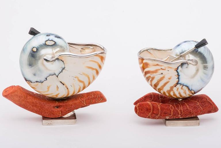 Elegant and Nice Nautilus Shells for Salt 7