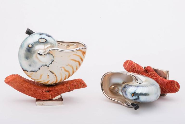 Elegant and Nice Nautilus Shells for Salt 8
