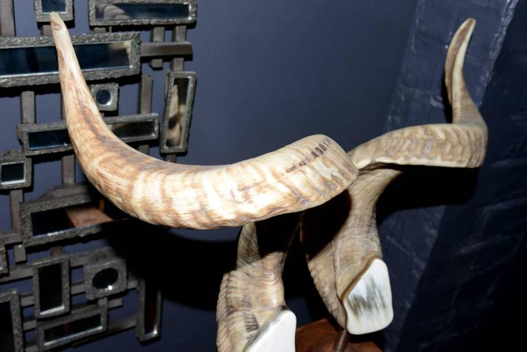 Contemporary Aries Horns Set of Two on Noble Wood Base For Sale