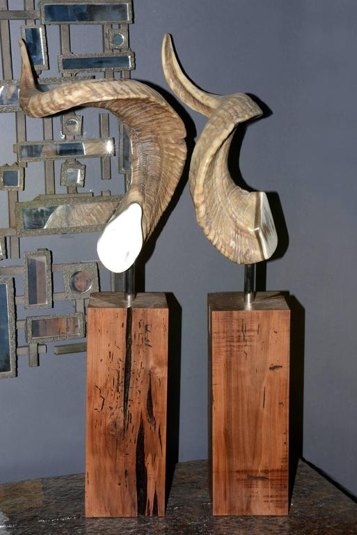 French Aries Horns Set of Two on Noble Wood Base For Sale