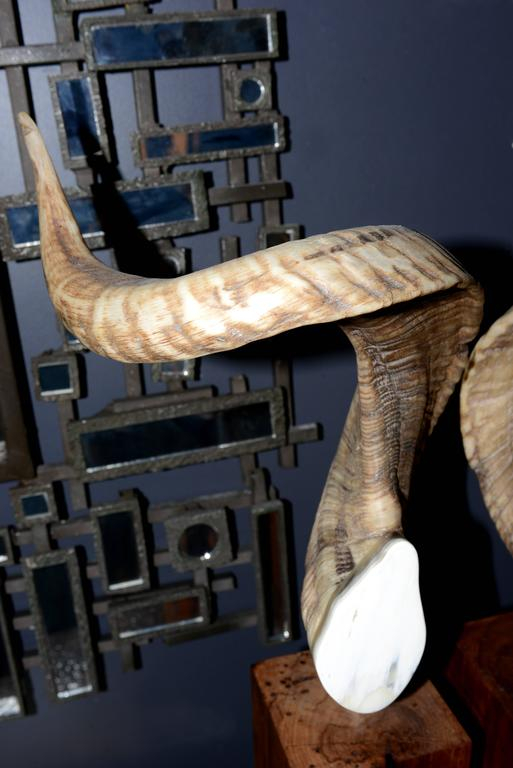 Aries Horns Set of Two on Noble Wood Base In Excellent Condition For Sale In Paris, FR