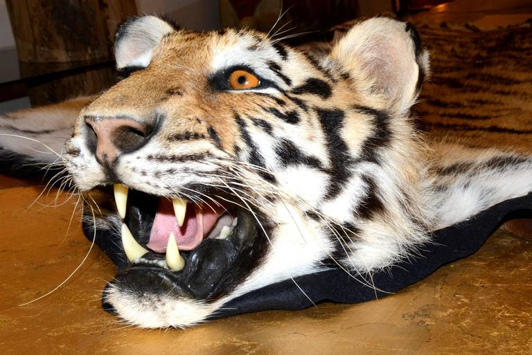 Tiger Carpet With Real Bengal Tiger Skin For Sale At 1stdibs