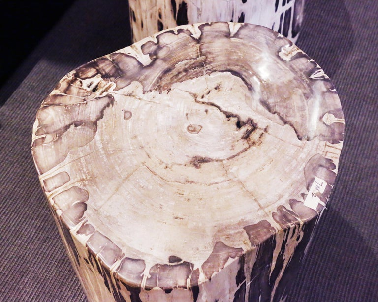 Petrified Wood Set of 2 n°B Side Table For Sale 1