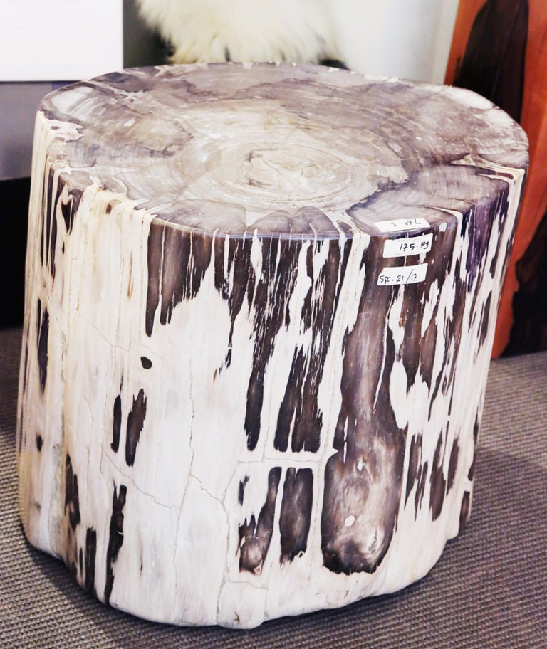 Petrified Wood Set of 2 n°B Side Table For Sale 3