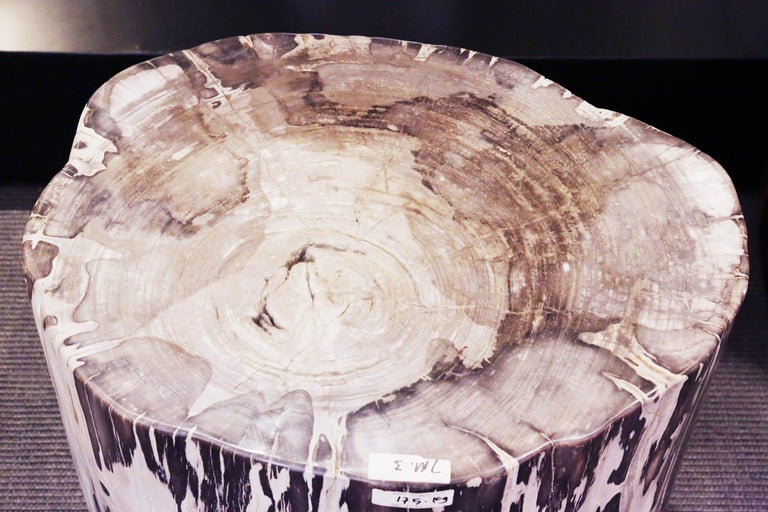 Petrified Wood Set of 2 n°B Side Table For Sale 10