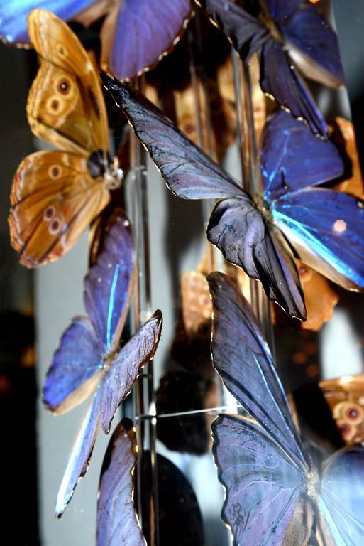 Contemporary Butterflies Morphos Flight Arranged under Square Framework For Sale