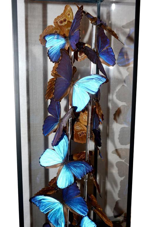 Peruvian Butterflies Morphos Flight Arranged under Square Framework For Sale