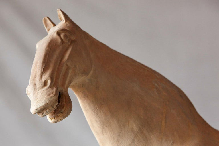 Large Terracotta Tang Dynasty Style Horse Sculpture For Sale 4