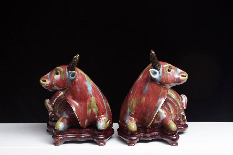 Pair of Chinese Porcelain Water Buffalos on Conforming Rosewood Stand 3