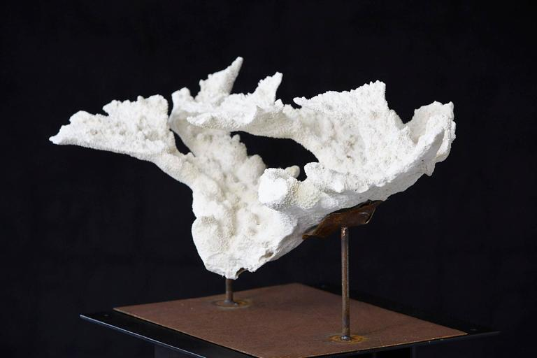Large Vintage White Coral Specimen on Custom-Made Iron Stand 4