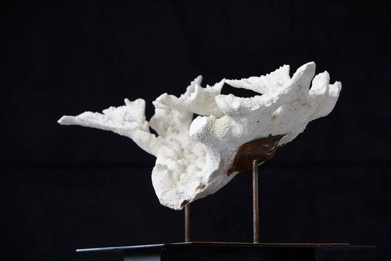 Large Vintage White Coral Specimen on Custom-Made Iron Stand 5