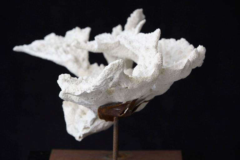 Large Vintage White Coral Specimen on Custom-Made Iron Stand 7