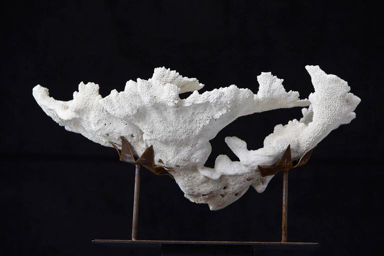 Large Vintage White Coral Specimen on Custom-Made Iron Stand 8