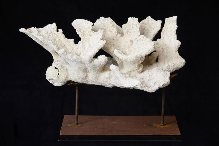 Large Vintage White Coral Specimen on Custom Made Iron Stand II 2