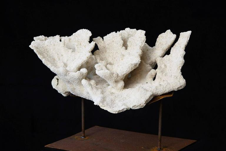 Large Vintage White Coral Specimen on Custom Made Iron Stand II 3