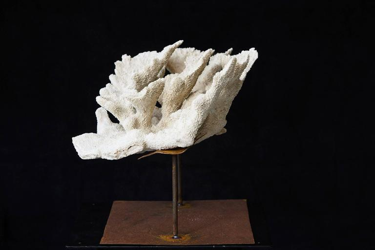 Large Vintage White Coral Specimen on Custom Made Iron Stand II 5