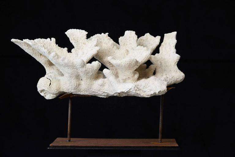 Large Vintage White Coral Specimen on Custom Made Iron Stand II 7