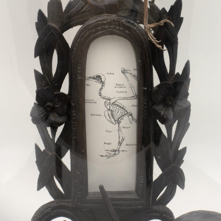 Glass Antique Black Forest Carving under Dome, Anatomy of a Bird, French For Sale