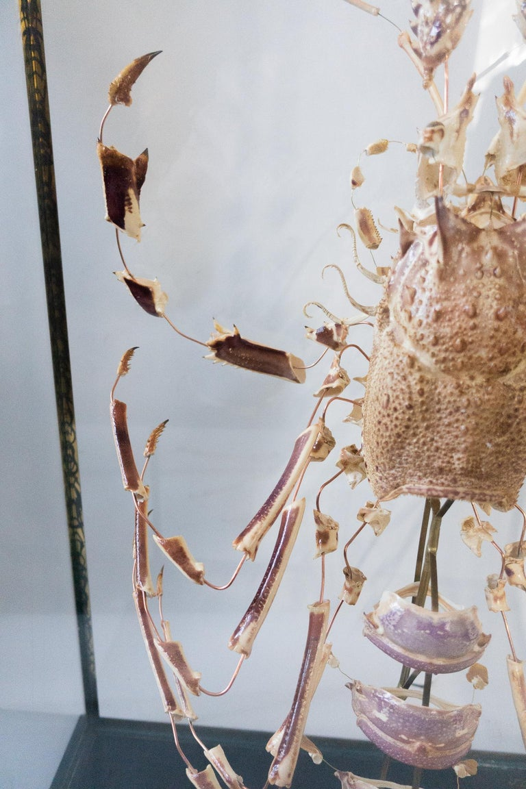 Contemporary Large French Deconstructed Clawed Lobster Sculpture in a Glass and Brass Case For Sale