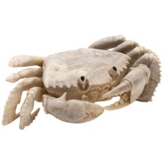 North American Moose Antler Carving of Crab