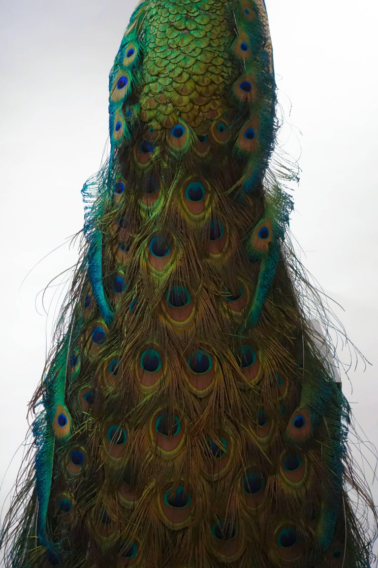 Contemporary Indian Blue Peacock For Sale