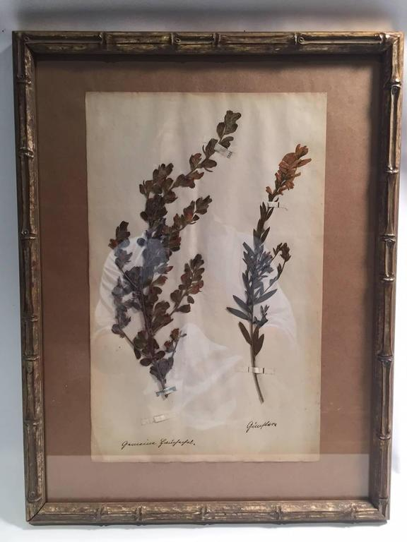 "Late 19th Century Framed and Pressed French Herbier ""Pressed Plant"" Specimens 2"