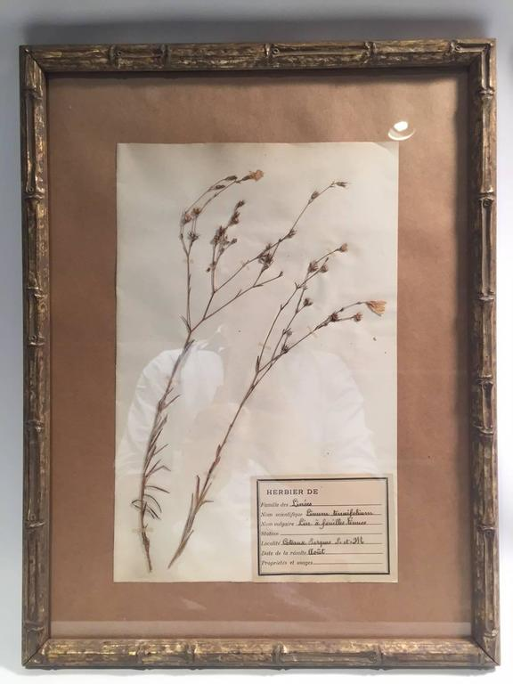 "Late 19th Century Framed and Pressed French Herbier ""Pressed Plant"" Specimens 4"