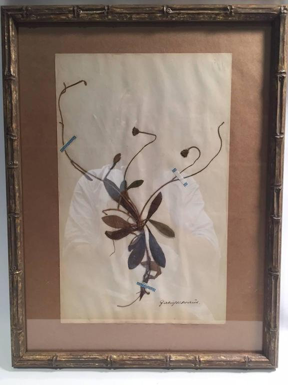 "Late 19th Century Framed and Pressed French Herbier ""Pressed Plant"" Specimens 5"