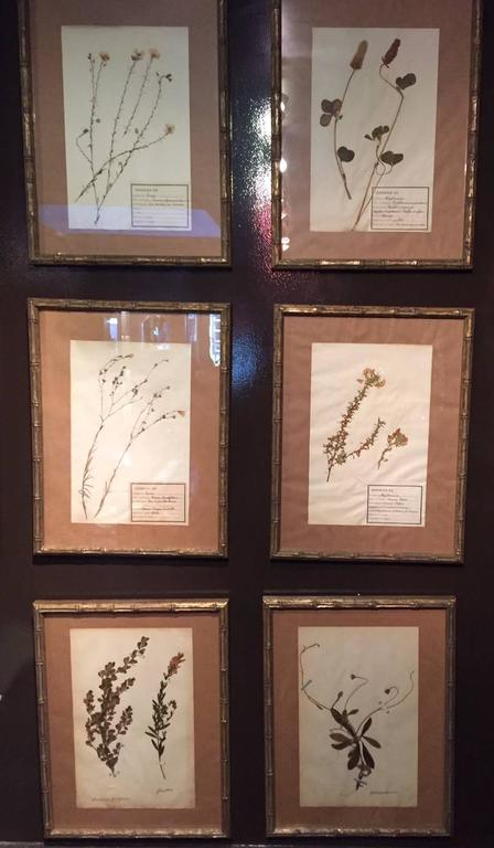 "Late 19th Century Framed and Pressed French Herbier ""Pressed Plant"" Specimens 9"