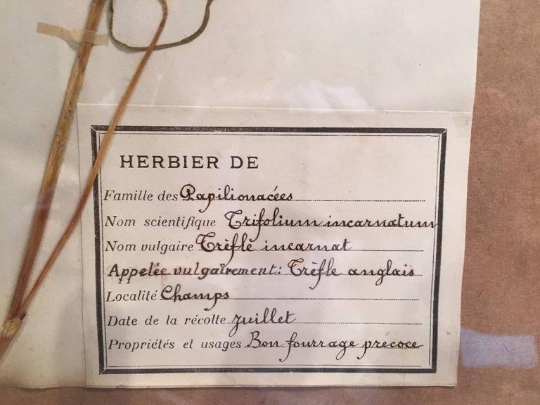 "Late 19th Century Framed and Pressed French Herbier ""Pressed Plant"" Specimens 8"