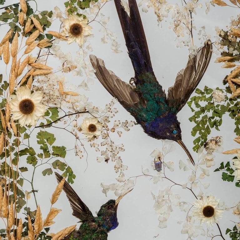 Victorian Hummingbird Taxidermy Screens, by Rowland Ward, 19th Century, English For Sale