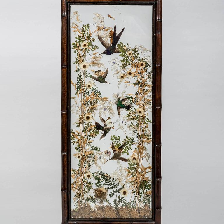 Hummingbird Taxidermy Screens, by Rowland Ward, 19th Century, English In Good Condition For Sale In New York, NY