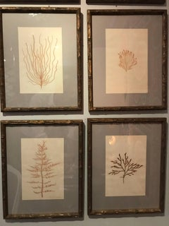 "Late 19C Framed and Pressed French Alguier (Herbier) ""Pressed Seaweed"" Specimens"