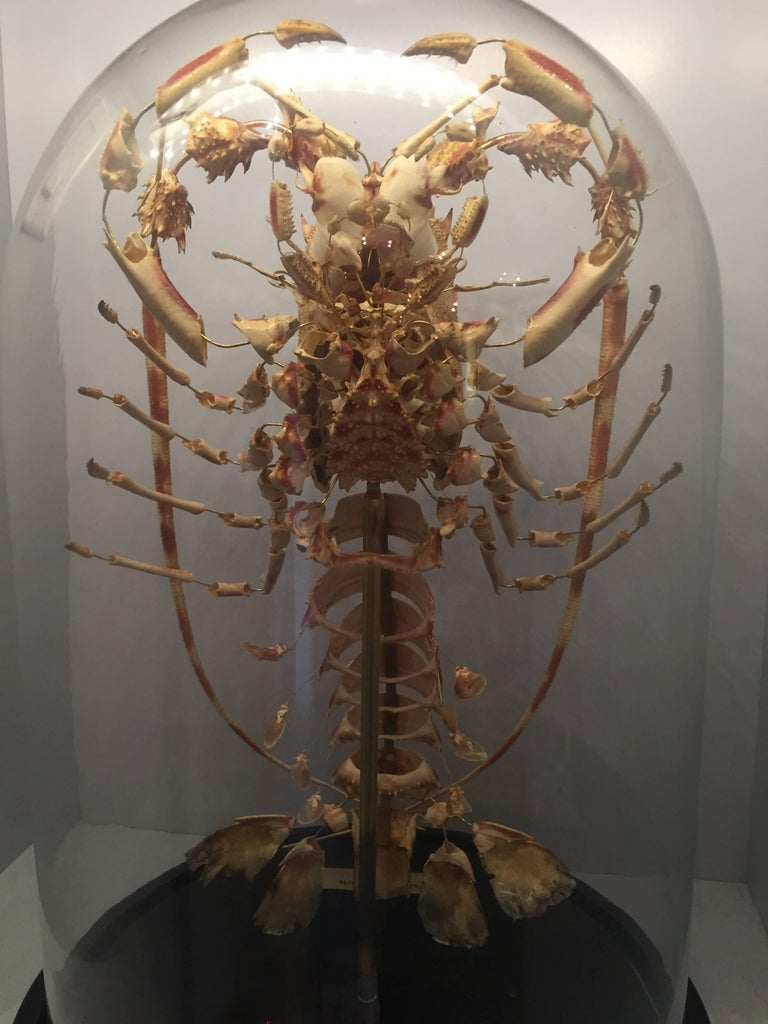 Lobster, Deconstructed, Mounted on a Black Wooden Base in a Glass Dome, France 1